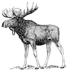 Antlered Animals
