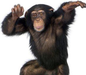 Monkey Charms